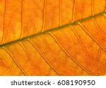 Leaf Texture Background  Detai...