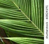 palm leaf   Shutterstock . vector #60824191