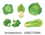 set vector cabbage and lettuce. ... | Shutterstock .eps vector #608273384