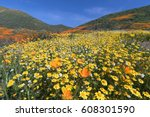 california golden poppy and... | Shutterstock . vector #608301590