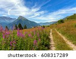 alpine flowers grow along... | Shutterstock . vector #608317289