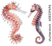 hand drawn watercolor seahorse. ... | Shutterstock . vector #608339696