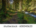 a spring sunny day in a dense... | Shutterstock . vector #608340620