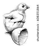egg and chicken | Shutterstock . vector #608351864