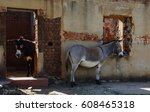 Two Small Donkeys At An...