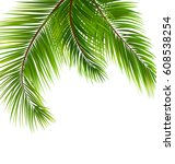 illustration exotic tropical... | Shutterstock . vector #608538254