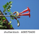 sweet flower on a blue sky... | Shutterstock . vector #608570600