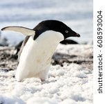 Small photo of Antarctica, the coast of Antarctica, penguins / I'm coming