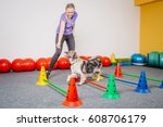 Stock photo dog training in the fitness club 608706179