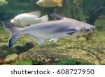 iridescent shark swimming in... | Shutterstock . vector #608727950