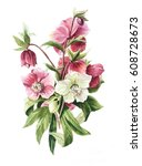 hellebore flowers white and red ... | Shutterstock . vector #608728673