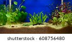 Aquascaping Of The Beautiful...
