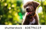 Stock photo happy cute brown labrador retriever puppy with bokeh foliage sunset light abstract background head 608796119