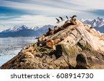 sea lions and albatros on isla... | Shutterstock . vector #608914730