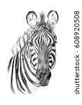 portrait of zebra drawn by hand ... | Shutterstock . vector #608920508