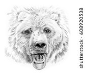 portrait of bear drawn by hand... | Shutterstock . vector #608920538