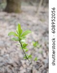 sprout spring plant greens in... | Shutterstock . vector #608952056