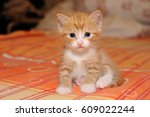 Stock photo funny little red kitten on a bad 609022244