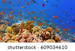 shoal of red coral fish and... | Shutterstock . vector #609034610
