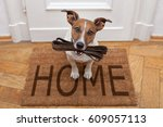 Stock photo jack russell dog waiting a the door at home with leather leash ready to go for a walk with his 609057113