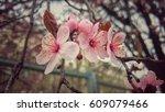pink blossom | Shutterstock . vector #609079466