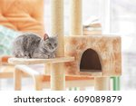 Stock photo cute funny cat and tree in room 609089879