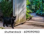 Stock photo curious black cat in front of vintage garden doors with bright green tropical plants on background 609090983