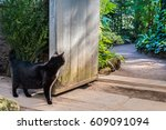 Stock photo curious black cat infront of vintage garden doors with bright green tropical plants on background 609091094