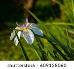morning dew lingers on a white... | Shutterstock . vector #609128060