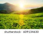 tea plantation in cameron... | Shutterstock . vector #609134630