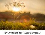 nature background. beautiful... | Shutterstock . vector #609139880