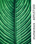 striped of tropical leaf ... | Shutterstock . vector #609157103