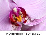 Blooming Purple Orchids Flower. ...