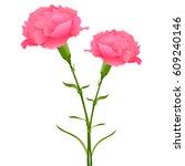mother's day carnation spring... | Shutterstock .eps vector #609240146