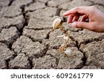 seedling wither on dry land. as ... | Shutterstock . vector #609261779