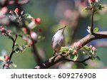 nuthatch bird sitting in the...   Shutterstock . vector #609276908