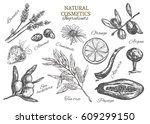 natural cosmetics. ingredients. ... | Shutterstock .eps vector #609299150