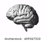 monochrome engraving brain side ... | Shutterstock .eps vector #609367310