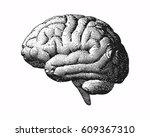 monochrome engraving brain side ... | Shutterstock .eps vector #609367310