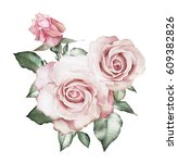 Stock photo watercolor flowers floral illustration pink rose branch of flowers isolated on white background 609382826
