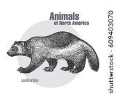 wolverine hand drawing. animals ... | Shutterstock .eps vector #609403070