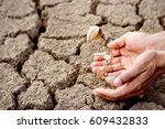 seedling wither on dry land. as ... | Shutterstock . vector #609432833