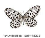 Butterfly Idea Hypermnestra ...