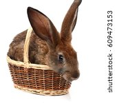 rabbit lying and looking at... | Shutterstock . vector #609473153