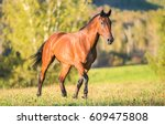 Stock photo horse walking in field 609475808