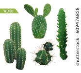 vector cactus plant. exotic... | Shutterstock .eps vector #609476828