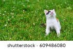 Stock photo motley cat playing on green grass 609486080