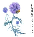Echinops And Bumble Bee ...