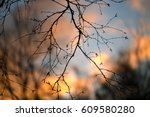 Silhouettes Of Branches Of A...