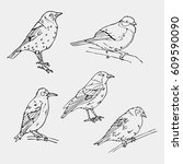 birds engraved style.oriole ... | Shutterstock .eps vector #609590090